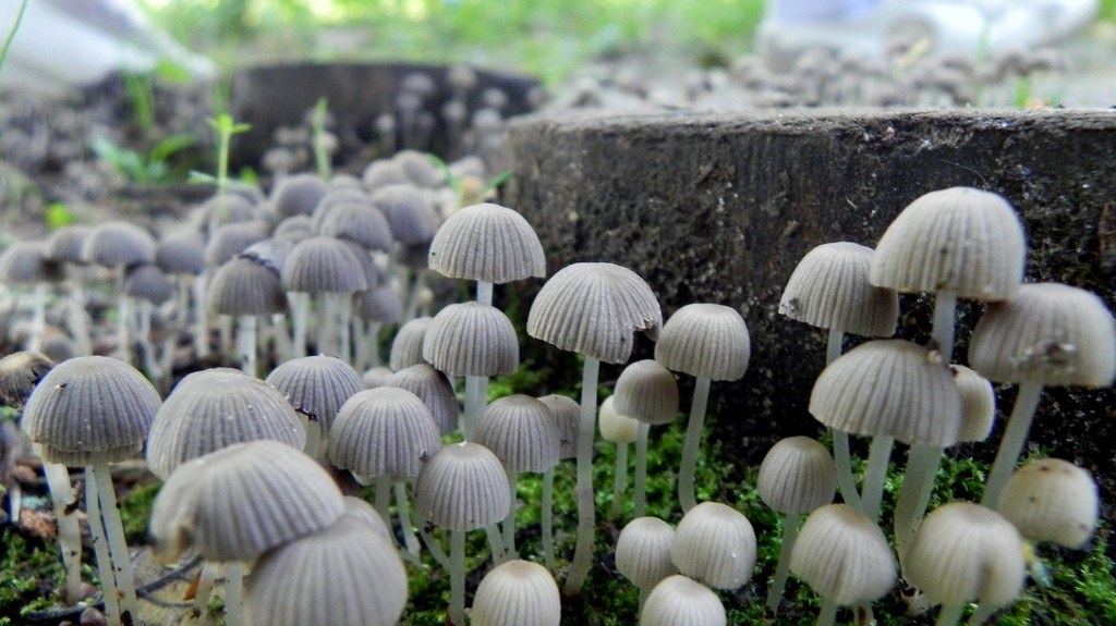 Could Magic Mushrooms Bring About a Rural Raving Revival?