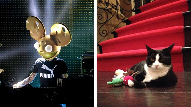 Deadmau5 Files Trademark Petition on Behalf of His Cat Meowingtons